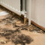 Mold Inspection in West Des Moines, Iowa