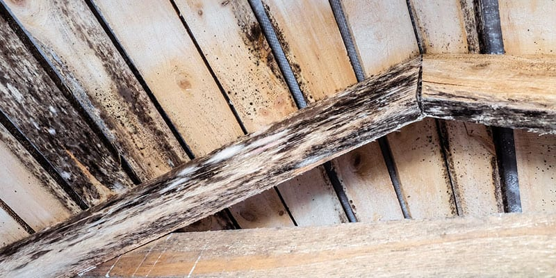 We Can Help You Clean Up Mold in Your Attic
