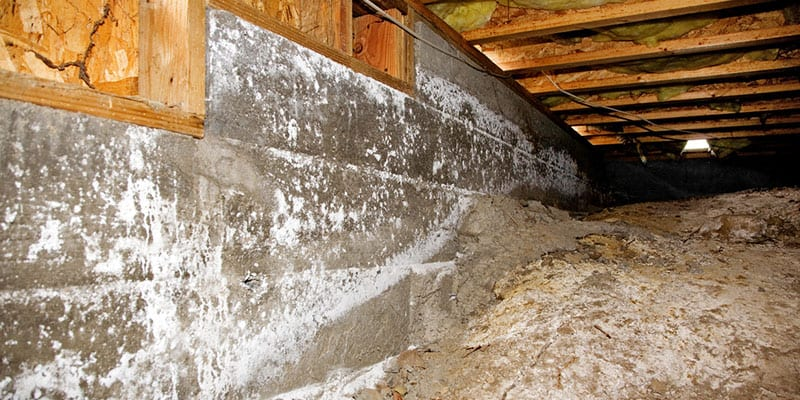 Steps You Can Take to Avoid Mold in Crawlspace